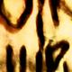 gallerie des images du site Min24